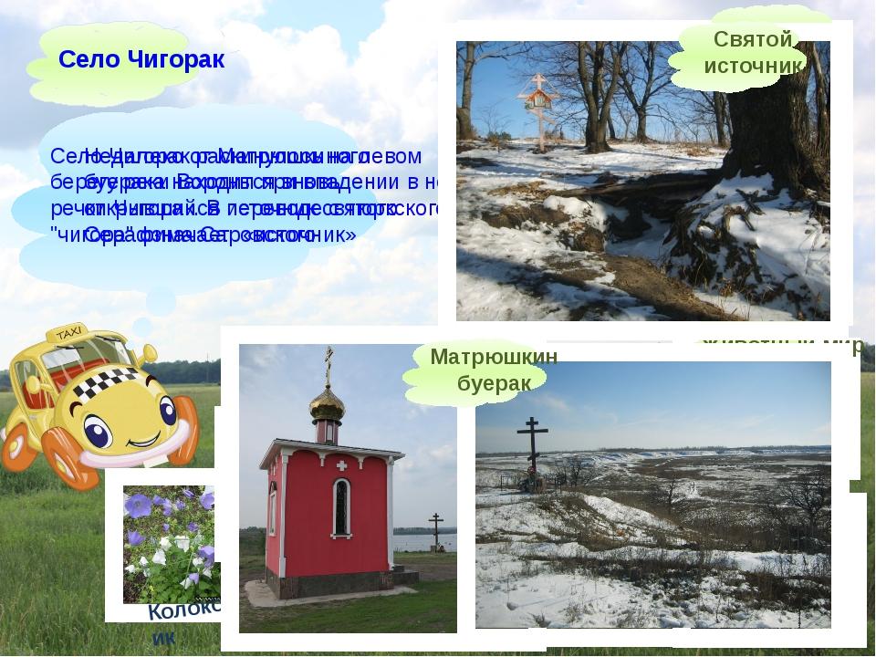 Село Чигорак раскинулось на левом берегу реки Вороны при впадении в нее речк...