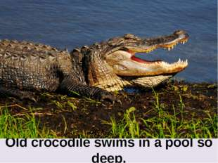 Old crocodile swims in a pool so deep,