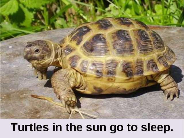 Turtles in the sun go to sleep.