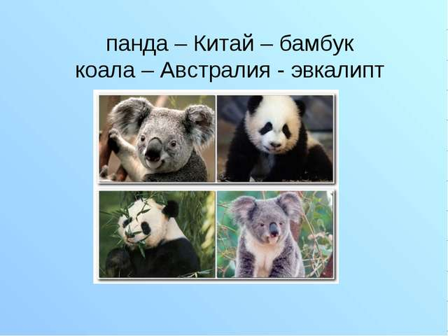 панда – Китай – бамбук коала – Австралия - эвкалипт