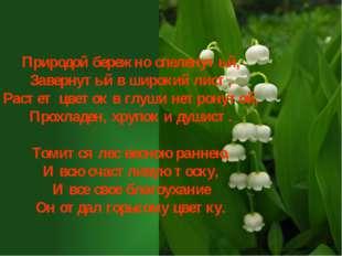 Природой бережно спеленутый, Завернутый в широкий лист, Растет цветок в глуш