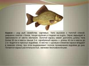 Караси— род рыб семейства карповых. Тело высокое с толстой спиной, умеренно