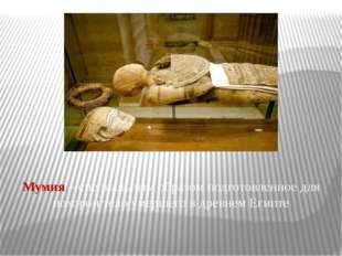 Мумия – специальным образом подготовленное для похорон тело умершего в древне
