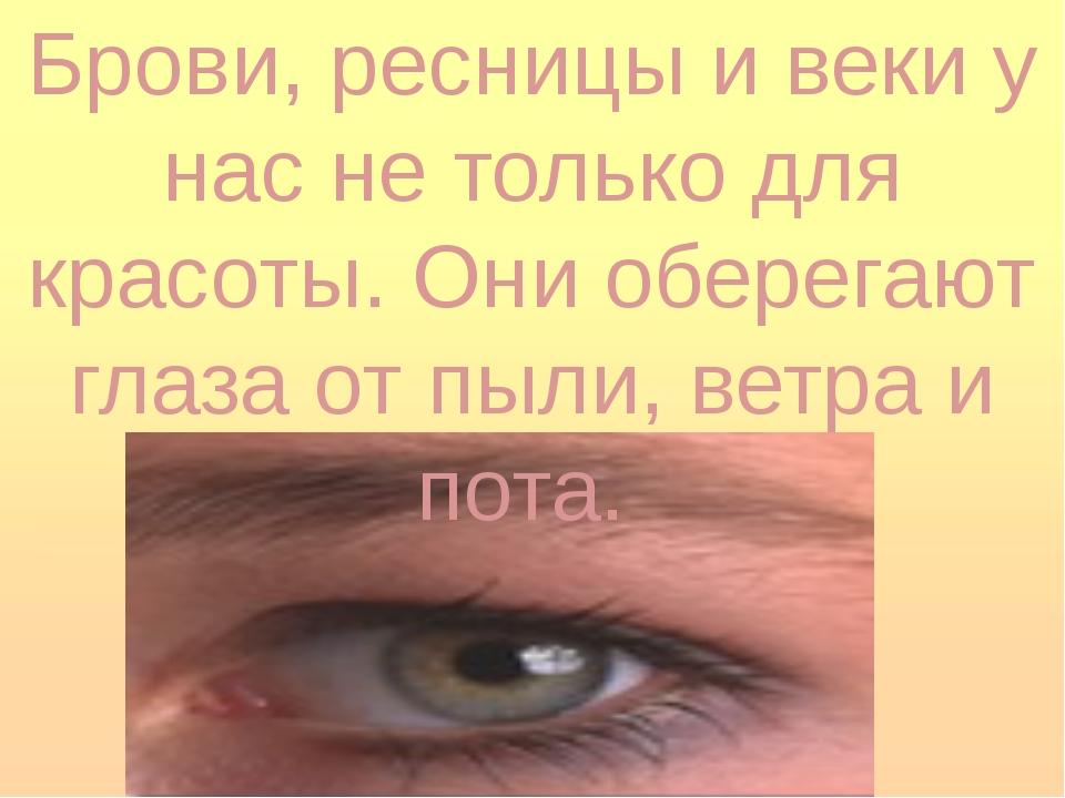 Брови, ресницы и веки у нас не только для красоты. Они оберегают глаза от пыл...