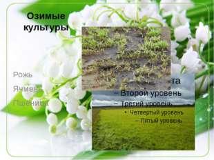 Озимые культуры Рожь Ячмень Пшеница