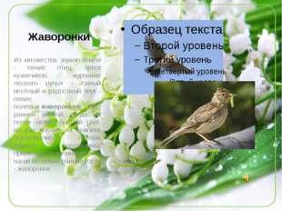 Жаворонки Из множества звуков земли - пение птиц, треск кузнечиков, журчание