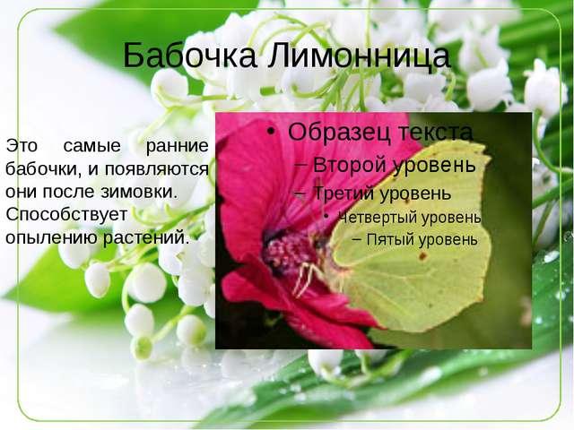 Бабочка Лимонница Это самые ранние бабочки, и появляются они после зимовки. С...
