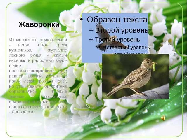 Жаворонки Из множества звуков земли - пение птиц, треск кузнечиков, журчание...