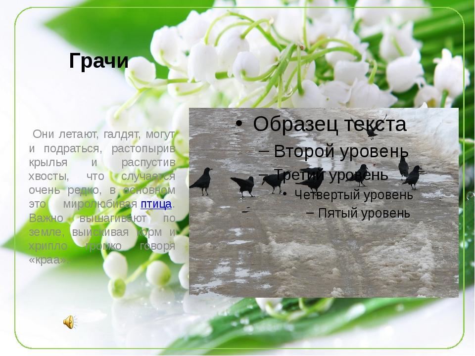 Грачи  Они летают, галдят, могут и подраться, растопырив крылья и распустив...