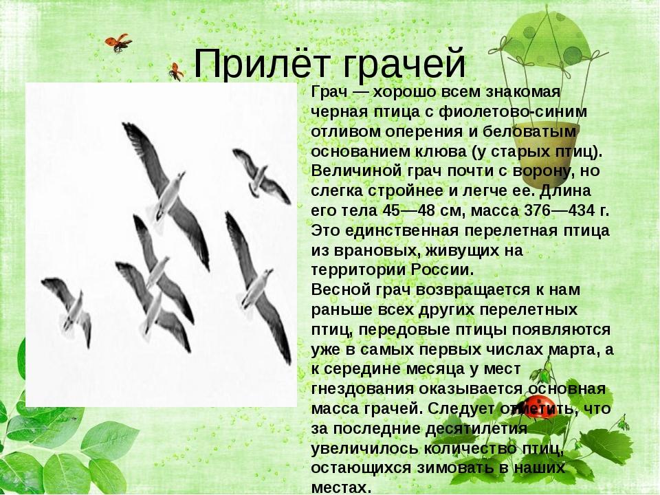 Прилёт грачей Грач— хорошо всем знакомая черная птица с фиолетово-синим отл...