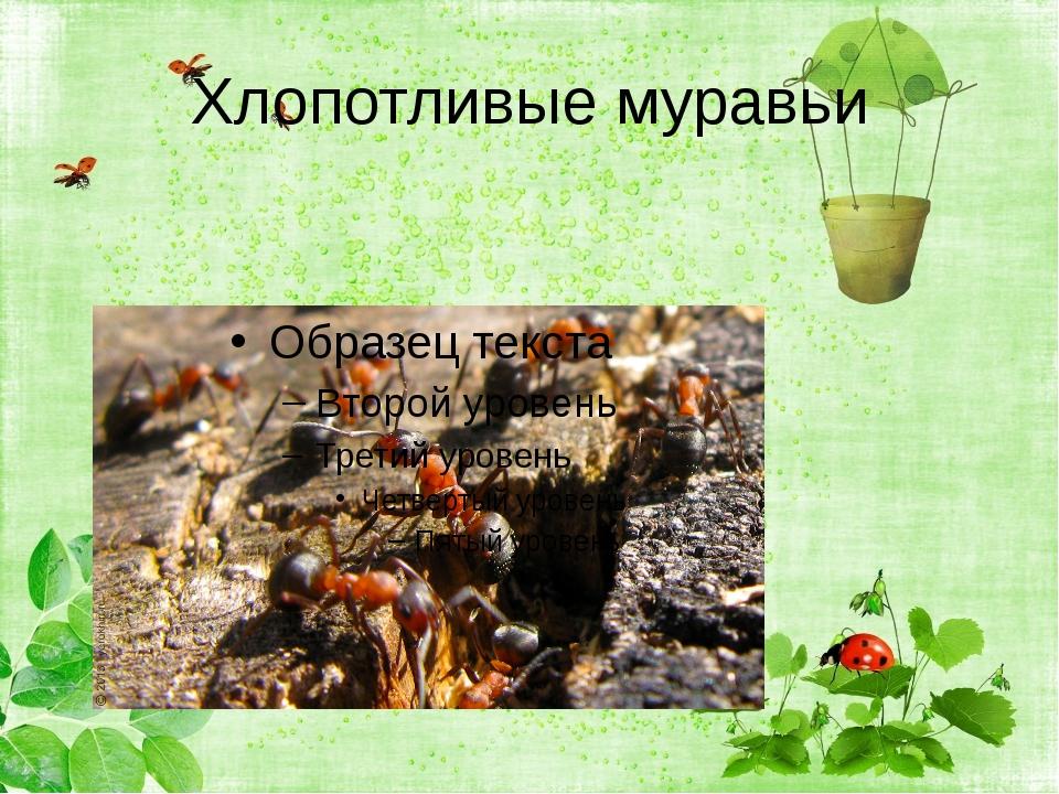 Хлопотливые муравьи