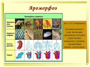 Ароморфоз (по А.Н.Северцеву) Возникновение в ходе эволюции признаков, которые