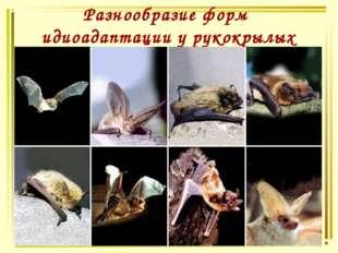 Разнообразие форм идиоадаптации у рукокрылых
