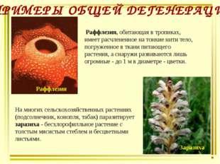 Раффлезия, обитающая в тропиках, имеет расчлененное на тонкие нити тело, пог