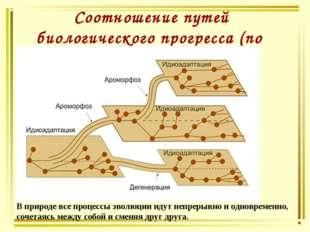 Соотношение путей биологического прогресса (по А.Н.Северцеву): В природе все