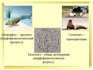 Катагенез – общая дегенерация (морфофизиологически регресс). Ароморфоз – арог