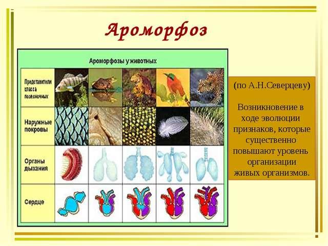 Ароморфоз (по А.Н.Северцеву) Возникновение в ходе эволюции признаков, которые...