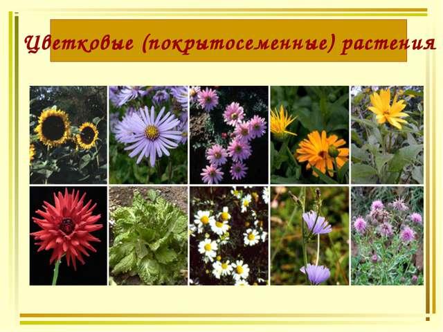 Цветковые (покрытосеменные) растения