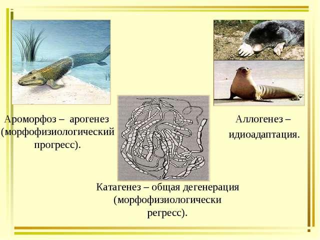 Катагенез – общая дегенерация (морфофизиологически регресс). Ароморфоз – арог...