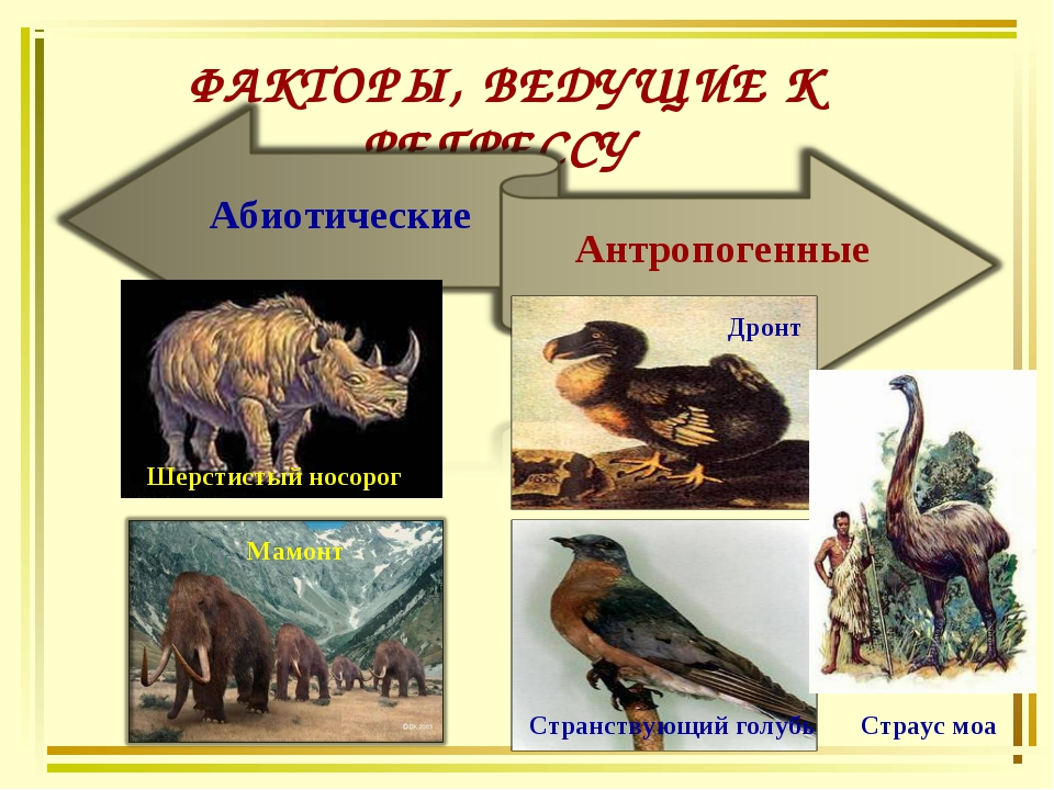 ФАКТОРЫ, ВЕДУЩИЕ К РЕГРЕССУ Абиотические Антропогенные Шерстистый носорог Дро...