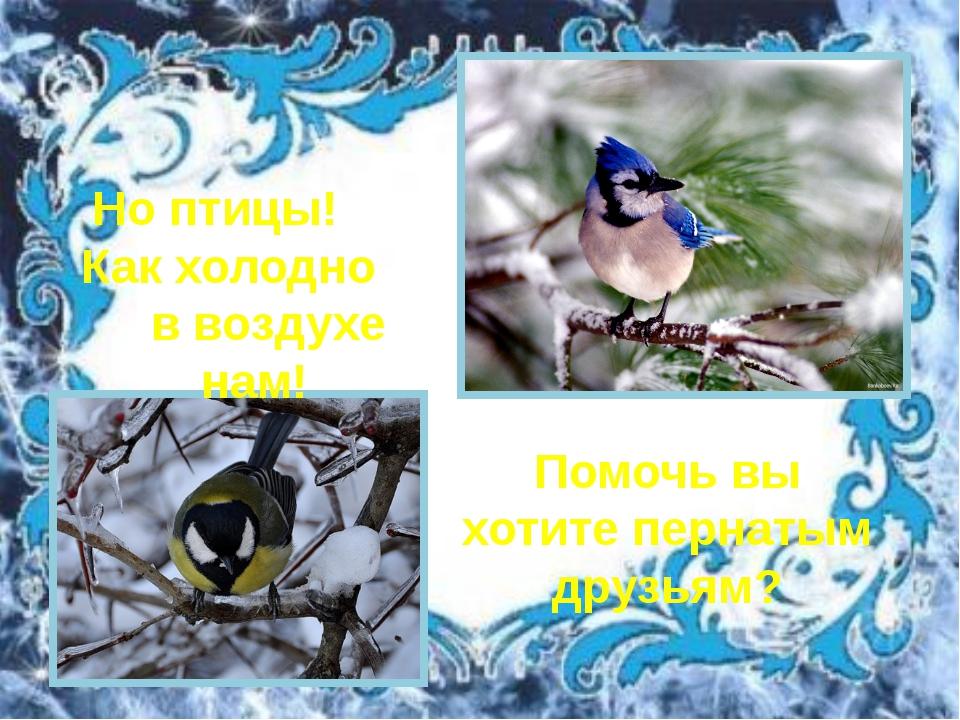 Но птицы! Как холодно в воздухе нам! Помочь вы хотите пернатым друзьям?
