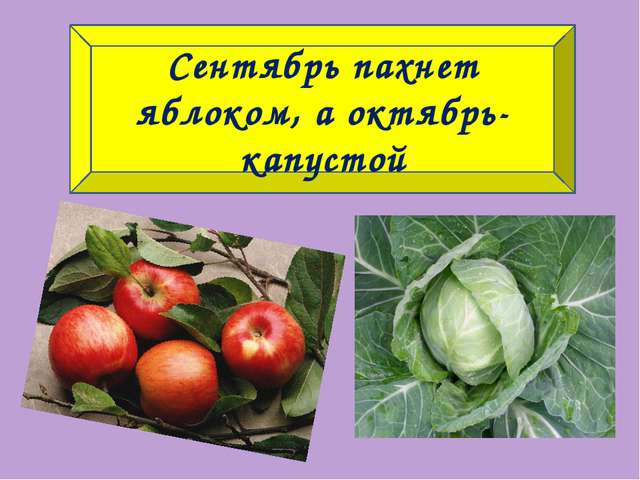 Сентябрь пахнет яблоком, а октябрь-капустой