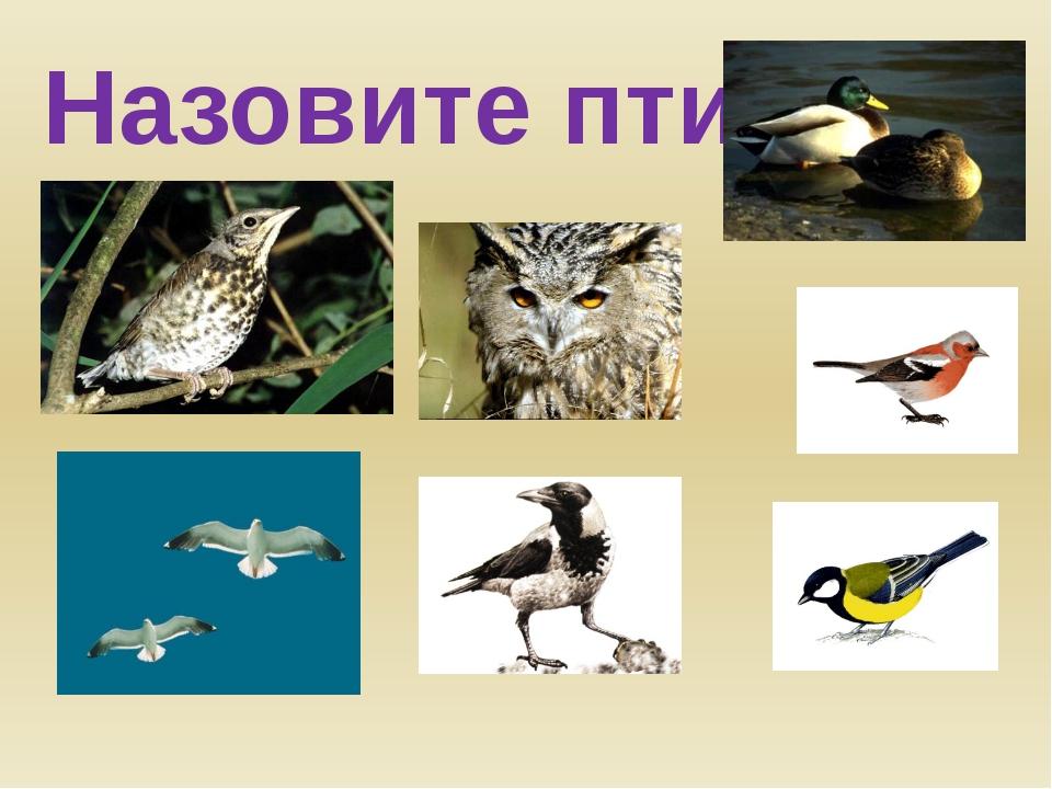 Назовите птиц