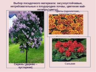 Выбор посадочного материала: засухоустойчивые, нетребовательные к плодородию