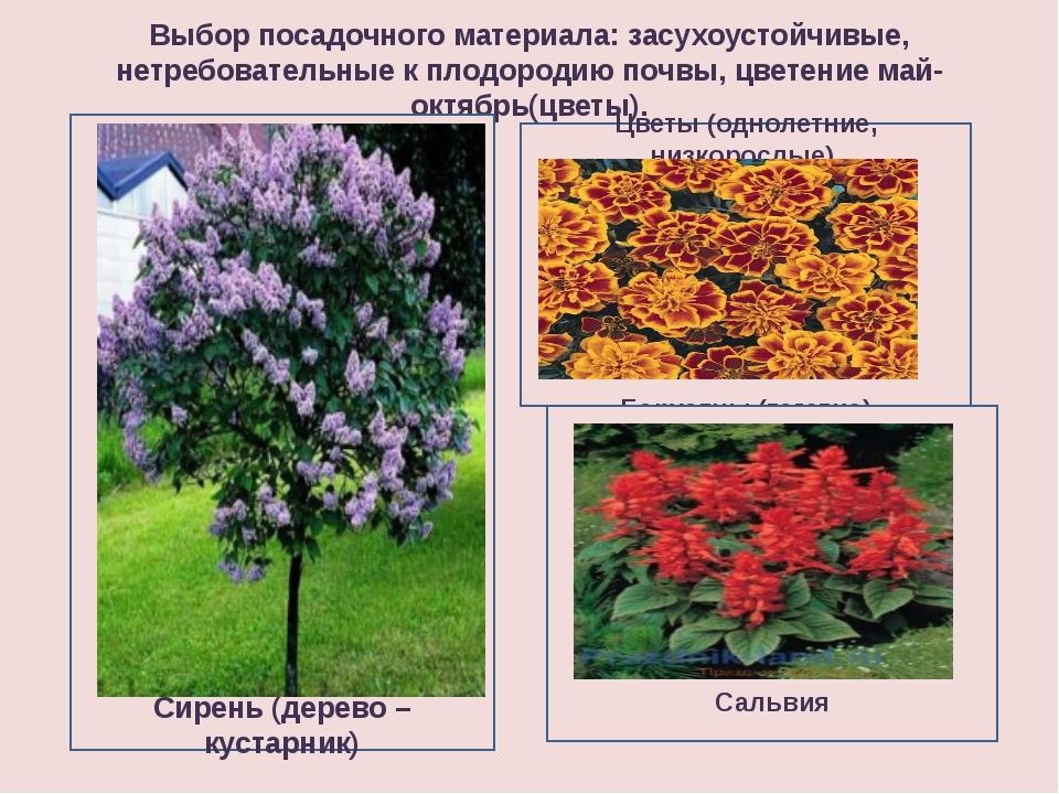 Выбор посадочного материала: засухоустойчивые, нетребовательные к плодородию...