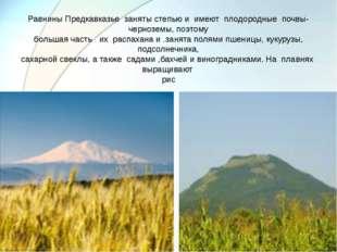 Равнины Предкавказье заняты степью и имеют плодородные почвы- черноземы, поэт