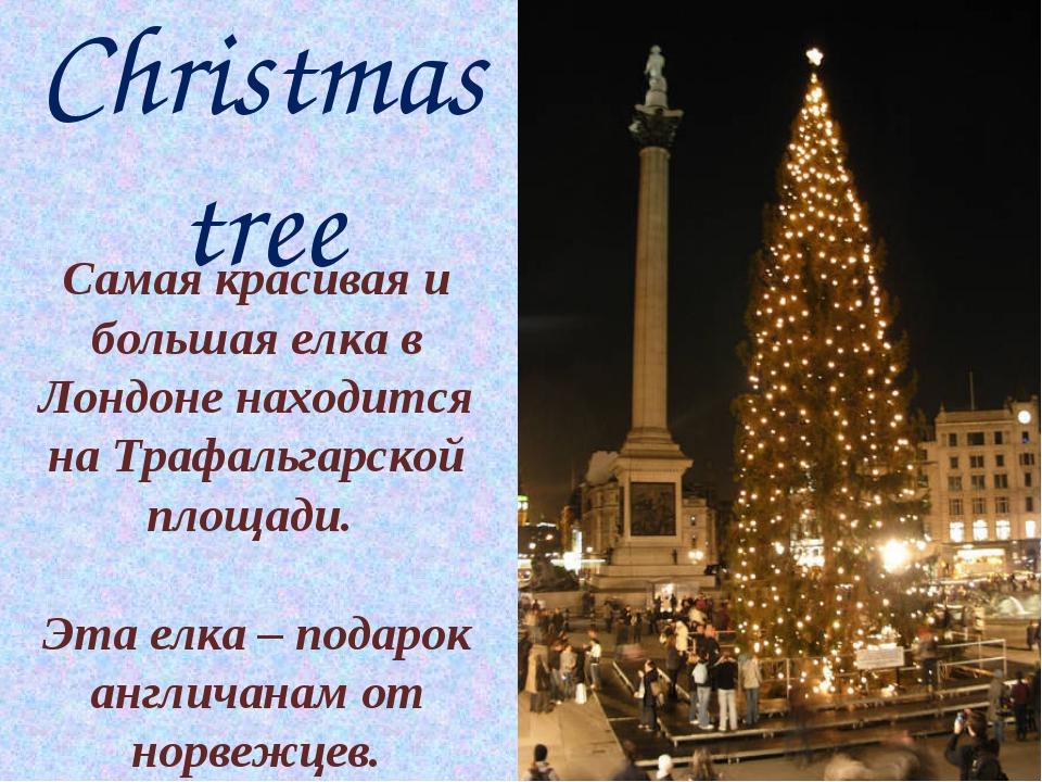 Christmas tree Самая красивая и большая елка в Лондоне находится на Трафальга...