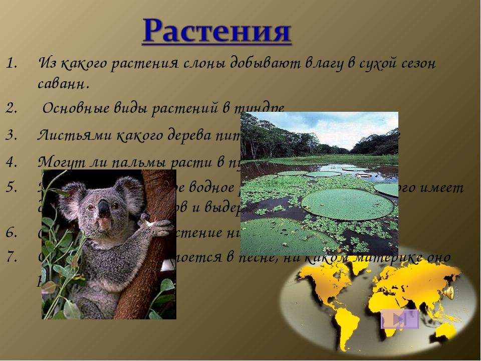 Из какого растения слоны добывают влагу в сухой сезон саванн. Основные виды р...