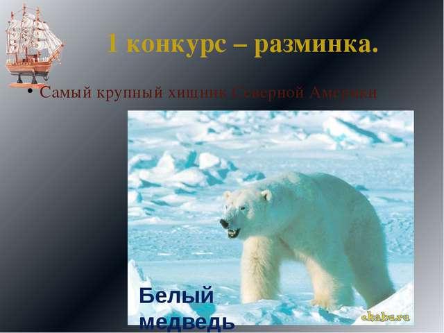 1 конкурс – разминка. Самый крупный хищник Северной Америки Белый медведь