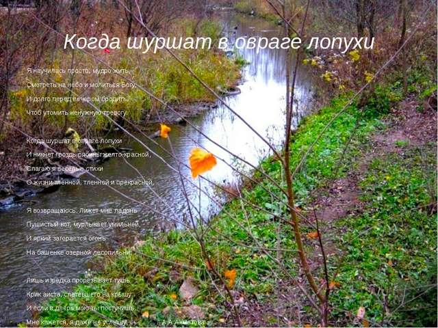 Когда шуршат в овраге лопухи Я научилась просто, мудро жить, Смотреть на небо...