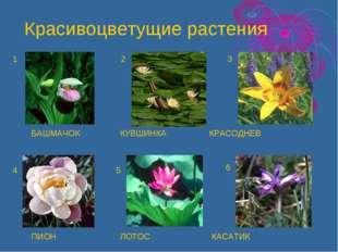 БАШМАЧОК КУВШИНКА КРАСОДНЕВ ПИОН ЛОТОС КАСАТИК 1 2 3 4 5 6 Красивоцветущие ра