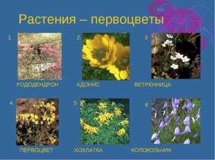 РОДОДЕНДРОН АДОНИС ВЕТРЕННИЦА ПЕРВОЦВЕТ ХОХЛАТКА КОЛОКОЛЬЧИК 1 2 3 4 5 6 Раст
