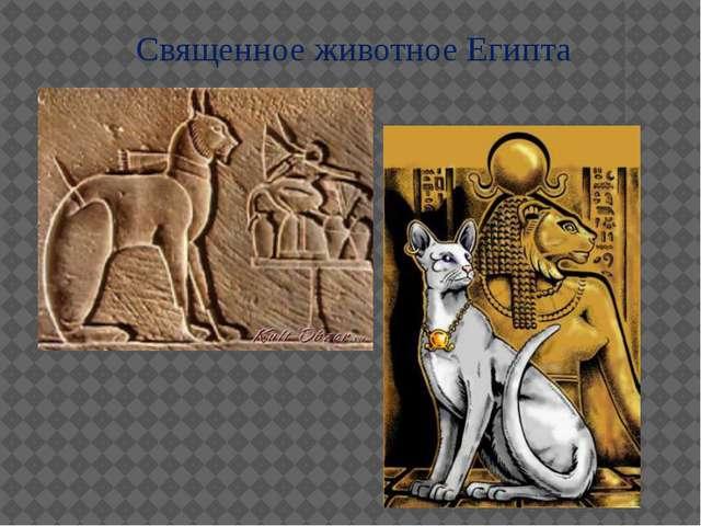 Священное животное Египта
