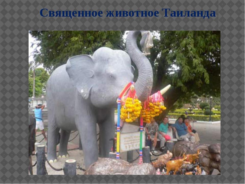 Священное животное Таиланда