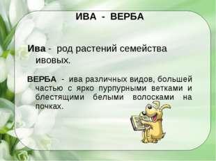 ИВА - ВЕРБА Ива - род растений семейства ивовых. ВЕРБА - ива различных видов,