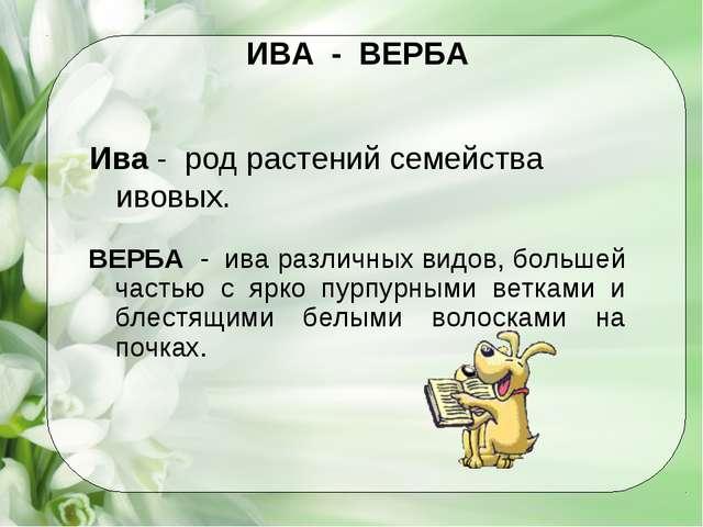 ИВА - ВЕРБА Ива - род растений семейства ивовых. ВЕРБА - ива различных видов,...