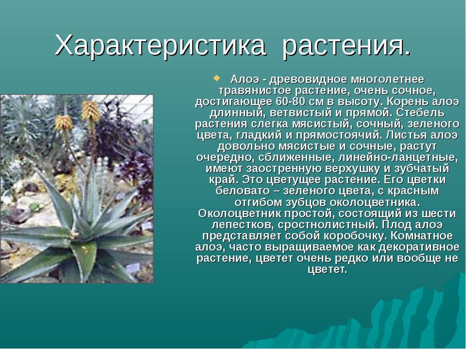 Характеристика растения. Алоэ - древовидное многолетнее травянистое растение,...