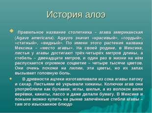 История алоэ Правильное название столетника – агава американская (Agave ameri