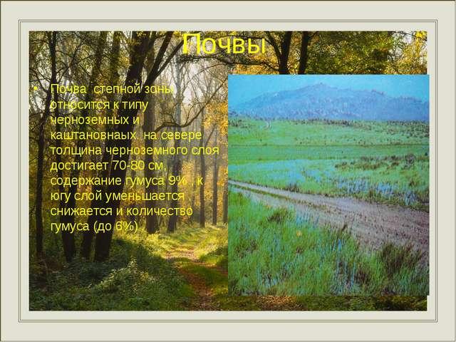 Почвы Почва степной зоны относится к типу черноземных и каштановнаых. на севе...
