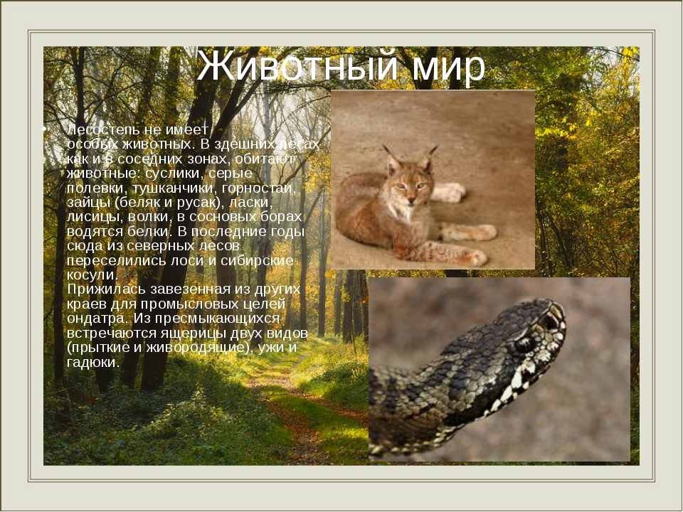 Животный мир Лесостепь не имеет особых животных. В здешних лесах как и в сос...