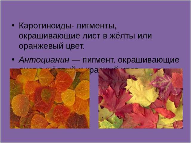 Каротиноиды- пигменты, окрашивающие лист в жёлты или оранжевый цвет. Антоциа...
