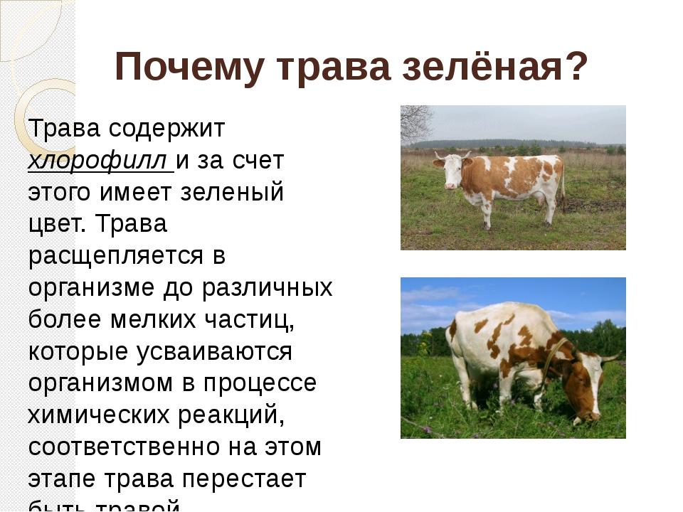 Почему корова траву ест зеленую а молоко белое