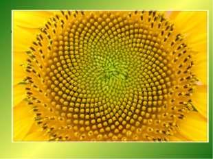 Винтовая симметрия Если внимательно приглядеться к стеблю растения, то окажет