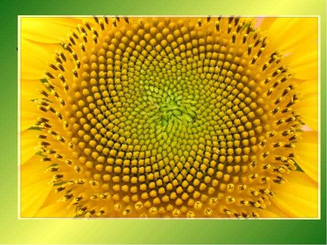 Винтовая симметрия Если внимательно приглядеться к стеблю растения, то окажет...
