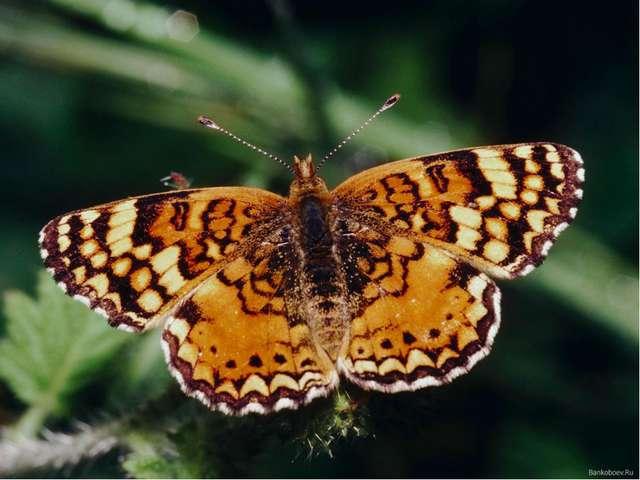 Симметрия в мире насекомых и животных
