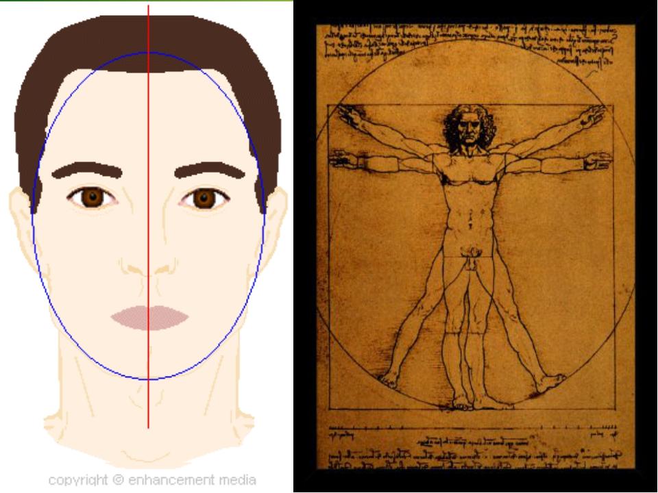 Симметрия человека Билатера́льная симме́трия (двусторонняя симметрия) — симме...